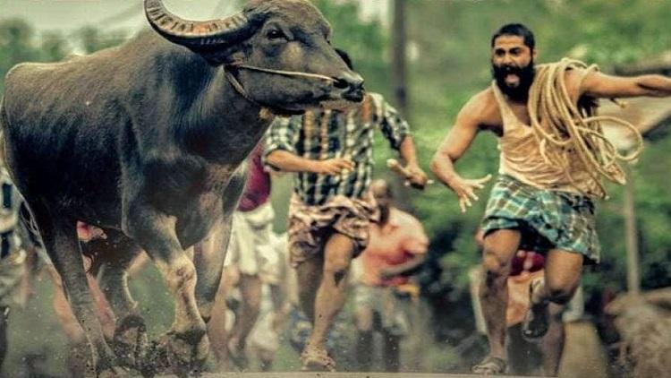 ৯৩তম অস্কার আসরে ভারতের প্রতিনিধিত্ব করবে মালয়ালম ছবি 'জাল্লিকাট্টু